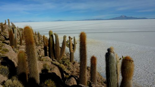 Isla Incahuasi, Salar de Uyuni