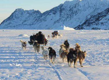 Expedición en trineo de perros