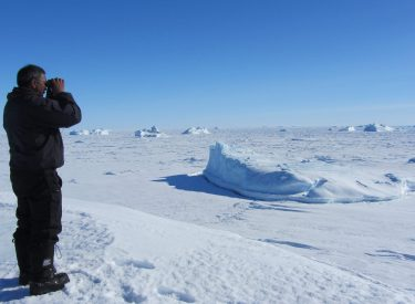 La banquisa groenlandesa