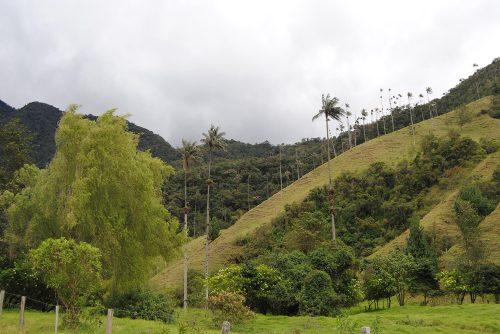 Valle de Cócora