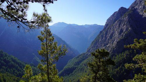 Bosque en la parte superior de la Garganta de Samaria