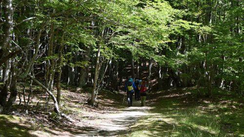 Atravesando el bosque camino de Valbonë