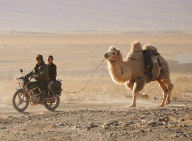 Kazajos llevando con la moto a su camello
