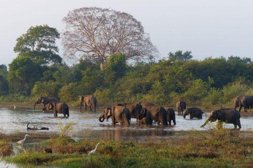 Safari de elefantes en Minneriya