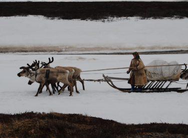 Mujer conduciendo el trineo de renos