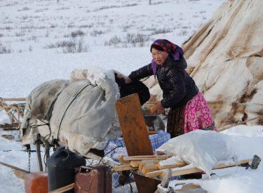 Mujer nenet descargando el trineo