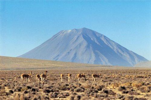 Vicuñas y volcán Misti