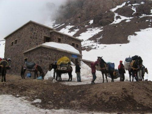 Mulas en el refugio del Toubkal