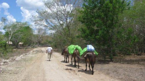Burros y porteador en el trekking del Mirador
