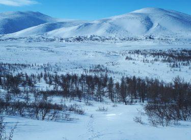 Tundra y montañas Urales polares