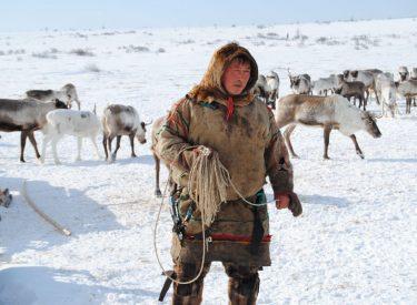 Pastor nómada nenet