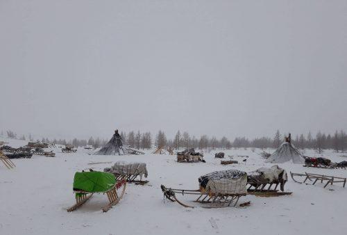 Campamento nenet