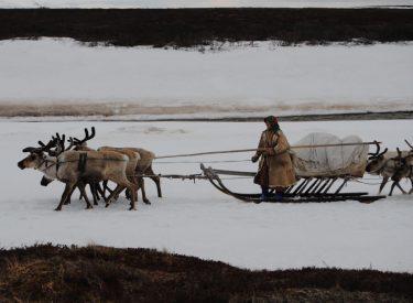 Mujer nenet conduciendo un trineo de renos