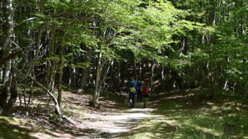 Caminando por los bosques cerca de Valbonë